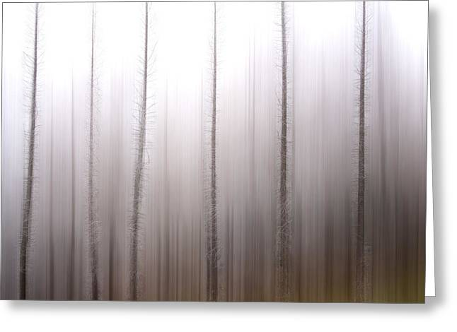 Coldness Greeting Cards - Tree trunks Greeting Card by Bernard Jaubert