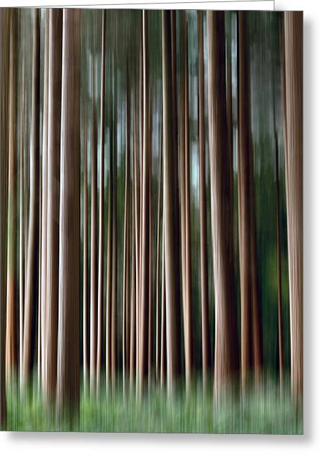 Nature Abstract Greeting Cards - Tree Trunks Greeting Card by Wim Lanclus