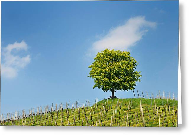 Viticulture Greeting Cards - Tree vineyard and blue sky Greeting Card by Matthias Hauser