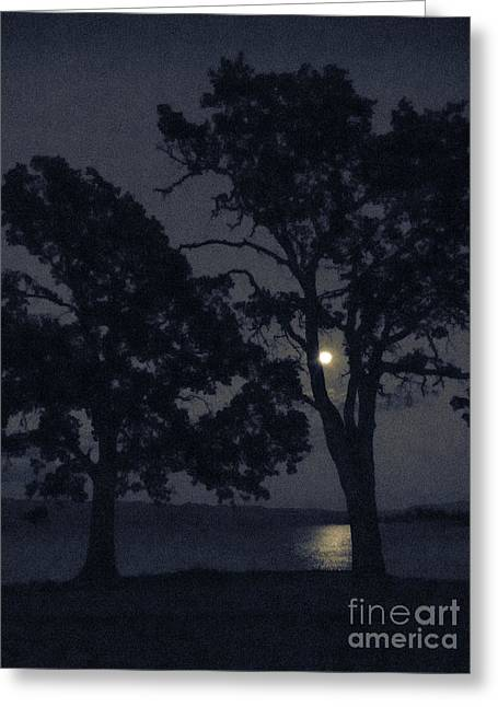 Lake Berryessa Greeting Cards - Tree Whispers in Midnight Blue Greeting Card by Cheryl Wood