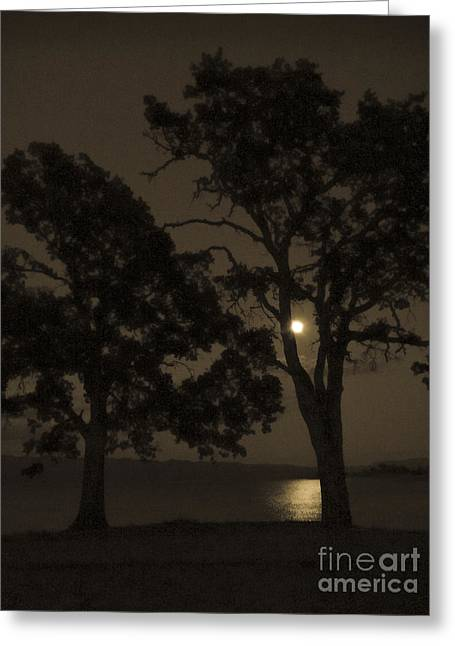Lake Berryessa Greeting Cards - Tree Whispers in Sepia Greeting Card by Cheryl Wood