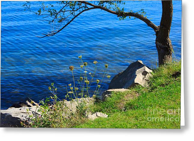 Barrie Greeting Cards - Tree Wildflowers and Rocks Greeting Card by Louise Heusinkveld