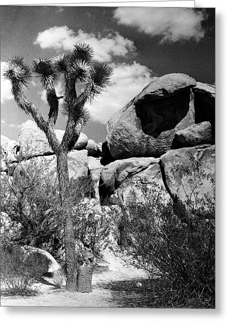 Square Format Greeting Cards - Tree with Rock Greeting Card by Alex Snay
