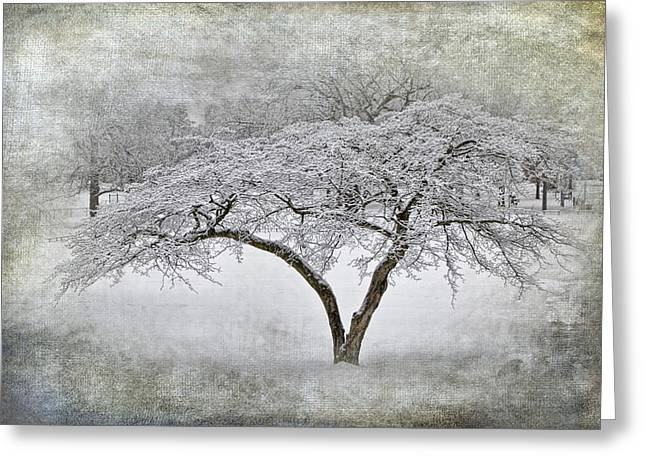 Snow Tree Prints Greeting Cards - Tree with Winter Snowfall at Garfield Park Greeting Card by Randall Nyhof