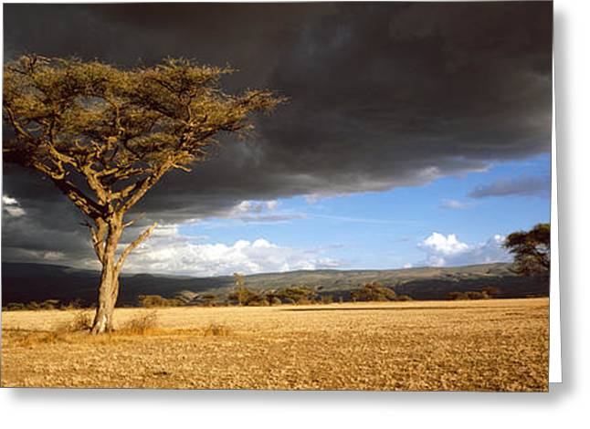Impending Greeting Cards - Tree W\storm Clouds Tanzania Greeting Card by Panoramic Images