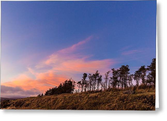 Heathland Greeting Cards - Treeline at sunset in Wicklow Mountains Greeting Card by Semmick Photo