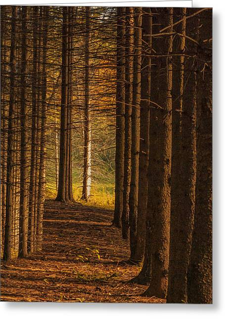 Traditional Media Greeting Cards - Treeline  Greeting Card by Jack Zulli