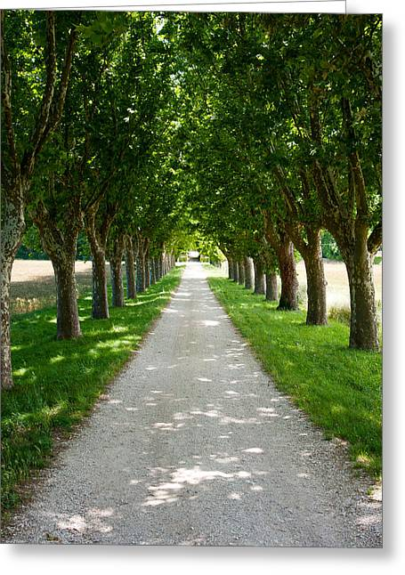 Vaucluse Greeting Cards - Treelined Along A Road, Vaugines Greeting Card by Panoramic Images