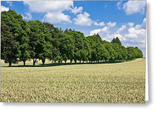 Treelined In A Cornfield Greeting Card by Panoramic Images