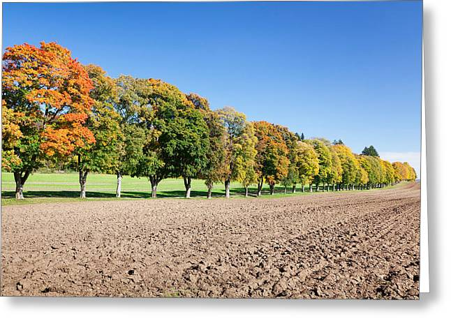 Treelined In A Field Greeting Card by Panoramic Images