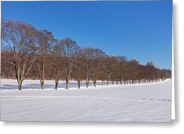 Rural Snow Scenes Greeting Cards - Treelined In A Snow Covered Field Greeting Card by Panoramic Images