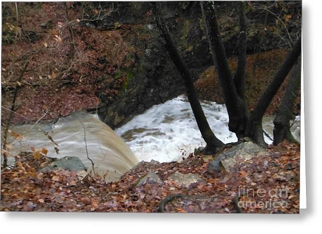 Fall Trees With Stream. Greeting Cards - Trees Above Indian Run Falls Greeting Card by Paddy Shaffer
