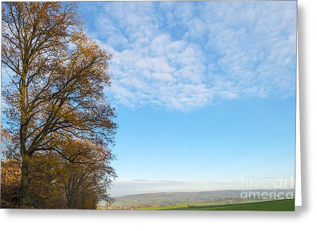 Limburg Greeting Cards - Trees along a field at sunset in autumn Greeting Card by Jan Marijs