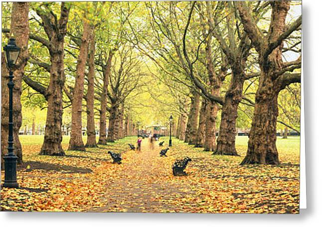 Fallen Leaf Greeting Cards - Trees Along A Footpath In A Park, Green Greeting Card by Panoramic Images
