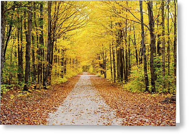 Upper Peninsula Greeting Cards - Trees Along A Pathway In Autumn Greeting Card by Panoramic Images
