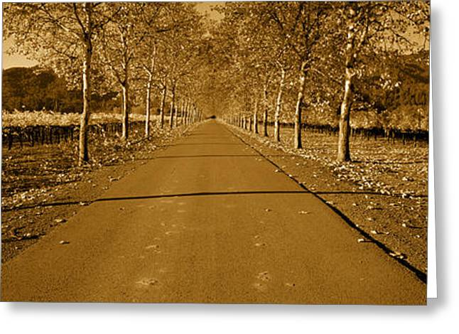 Vineyard Scene Greeting Cards - Trees Along A Road, Beaulieu Vineyard Greeting Card by Panoramic Images