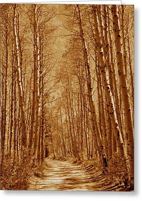 Californian Greeting Cards - Trees Along A Road, Log Cabin Gold Greeting Card by Panoramic Images