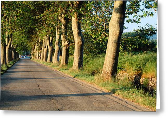 Vaucluse Greeting Cards - Trees Along A Road, Vaucluse, Provence Greeting Card by Panoramic Images