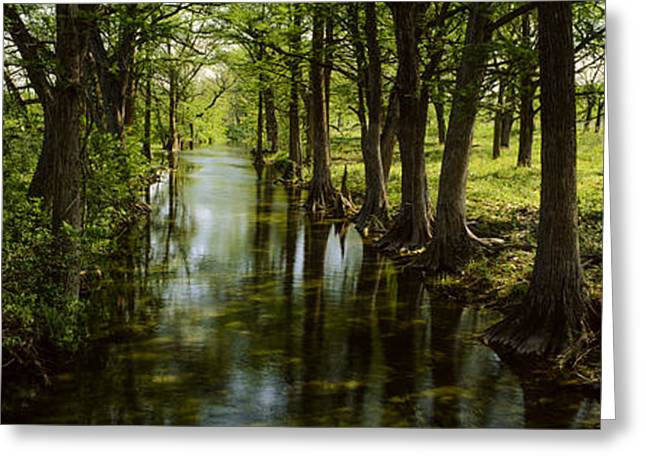 Reflections In River Greeting Cards - Trees Along Blanco River, Texas, Usa Greeting Card by Panoramic Images