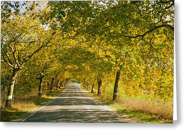 Trees Along The Road, Portugal Greeting Card by Panoramic Images