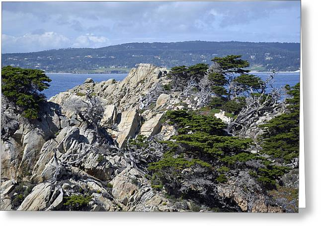 Point Lobos Reserve Greeting Cards - Trees Amidst the Cliffs in Californias Point Lobos State Natural Reserve Greeting Card by Bruce Gourley