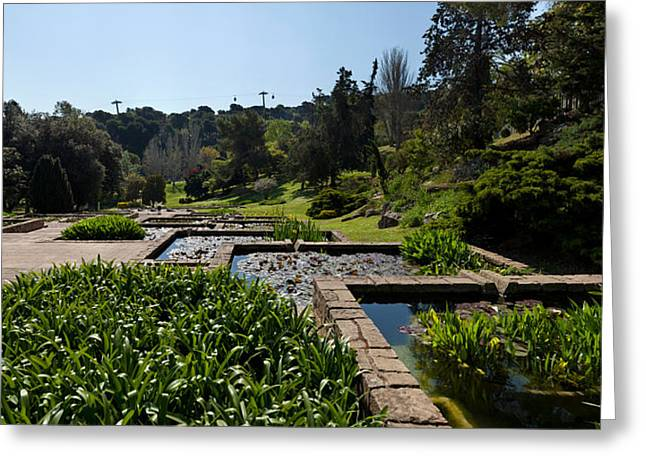 Aquatic Greeting Cards - Trees And Aquatic Plants In The Garden Greeting Card by Panoramic Images