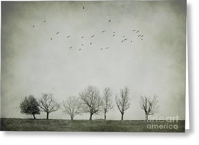 Fine Art White Nature Trees Greeting Cards - Trees and birds Greeting Card by Diana Kraleva