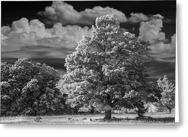 Scenic Drive Greeting Cards - Trees and Clouds near Sleeping Bear Dunes Greeting Card by Randall Nyhof