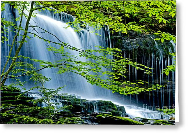 Blurr Greeting Cards - Trees and Falls Greeting Card by Paul W Faust -  Impressions of Light