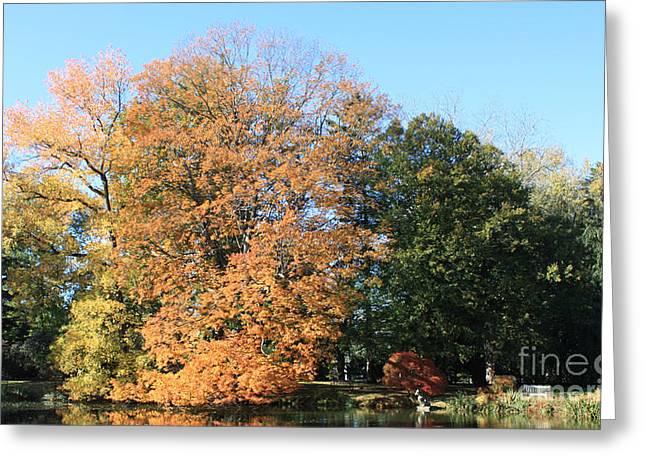 Botanical Greeting Cards - Trees and Lake at Westbury Gardens Greeting Card by John Telfer