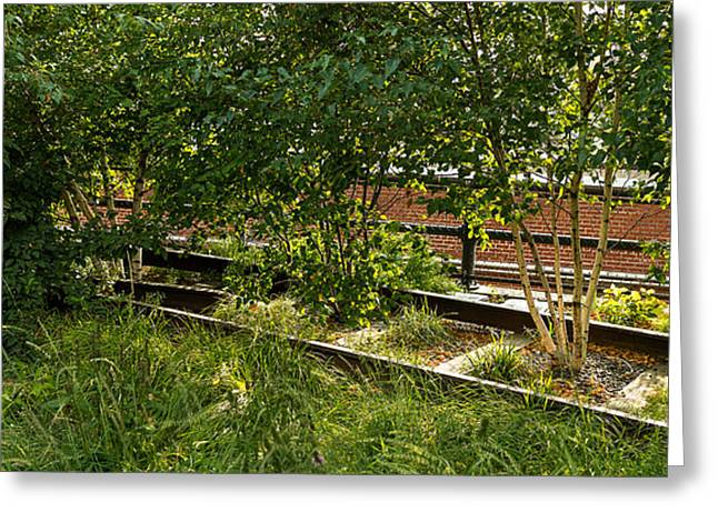 High Line Greeting Cards - Trees And Railroad Track In A Park Greeting Card by Panoramic Images