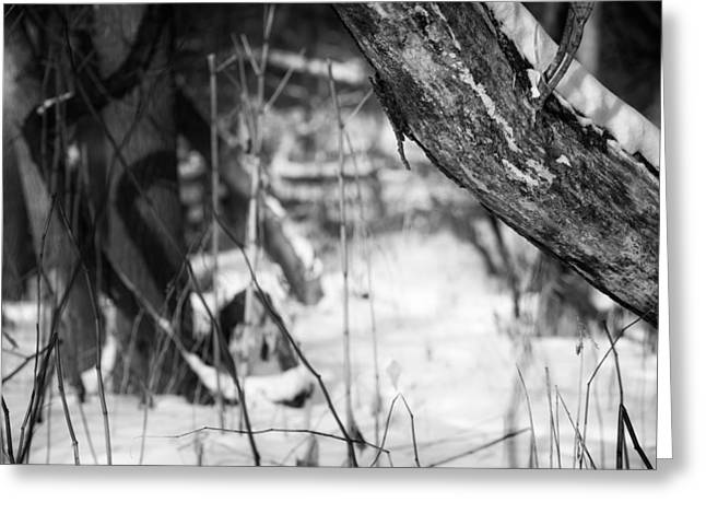 Petrifying Springs Greeting Cards - Trees and Shadows Along the Pike River. Greeting Card by Chris Tobias