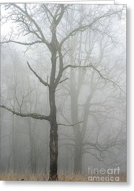 Locust Greeting Cards - Trees and Winter Fog Greeting Card by Thomas R Fletcher