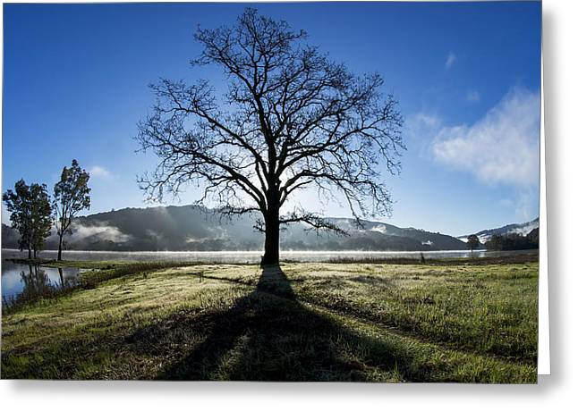 Santa Cruz Ca Photographs Greeting Cards - Trees Are Us Greeting Card by Sean Foster