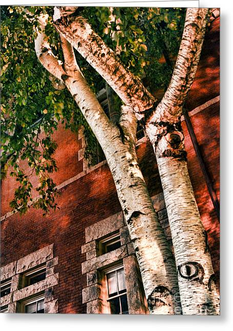 Trees At Night Greeting Card by HD Connelly