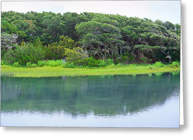 Rachel Carson Greeting Cards - Trees At Rachel Carson Coastal Nature Greeting Card by Panoramic Images