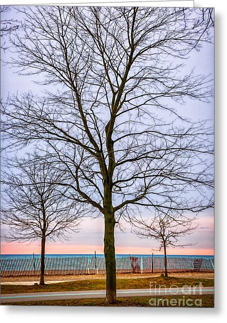 Winter Trees Greeting Cards - Trees at the Boardwalk in Toronto Greeting Card by Elena Elisseeva