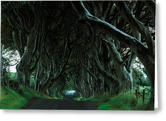 Dark Hedges Greeting Cards - Trees At The Dark Hedges, Armoy, County Greeting Card by Panoramic Images