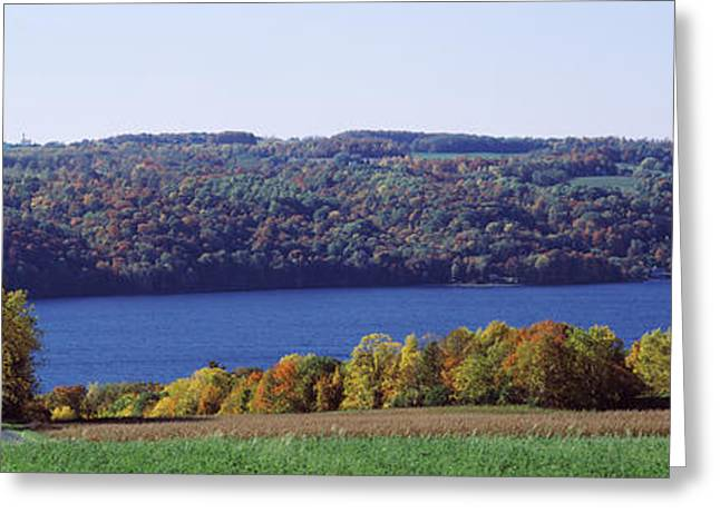 Finger Lakes Greeting Cards - Trees At The Lakeside, Owasco Lake Greeting Card by Panoramic Images