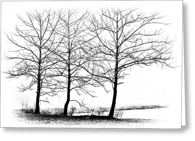 Fine Art White Nature Trees Greeting Cards - Trees at Waters Edge Greeting Card by Tom Mc Nemar