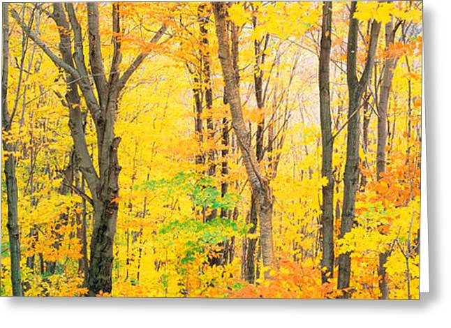 Colorful Photography Greeting Cards - Trees Autumn Quebec Canada Greeting Card by Panoramic Images