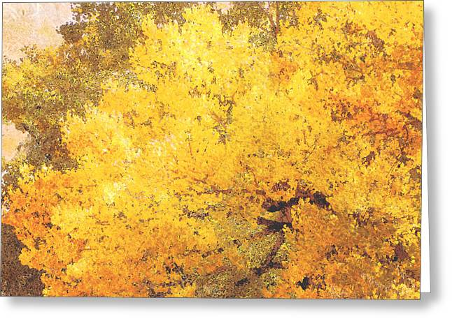 Manipulated Photography Greeting Cards - Trees Autumn Yellow Cottonwood Greeting Card by Ann Powell