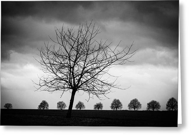 Trees Black And White Greeting Card by Matthias Hauser
