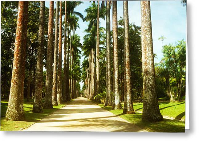 Treelined Greeting Cards - Trees Both Sides Of A Garden Path Greeting Card by Panoramic Images