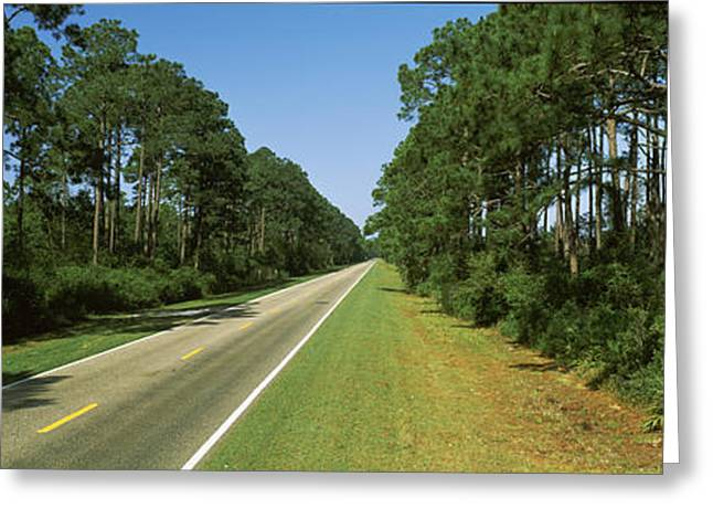 Apalachicola Greeting Cards - Trees Both Sides Of A Road, Route 98 Greeting Card by Panoramic Images