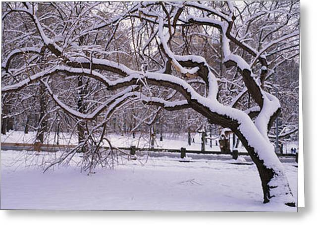 Central Park Winter Greeting Cards - Trees Covered With Snow In A Park Greeting Card by Panoramic Images