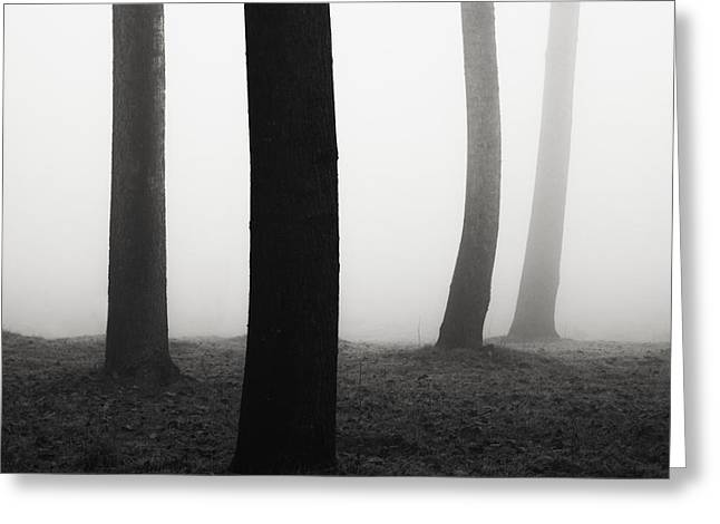Repetition Greeting Cards - Trees dancing in the fog Greeting Card by Matteo Colombo