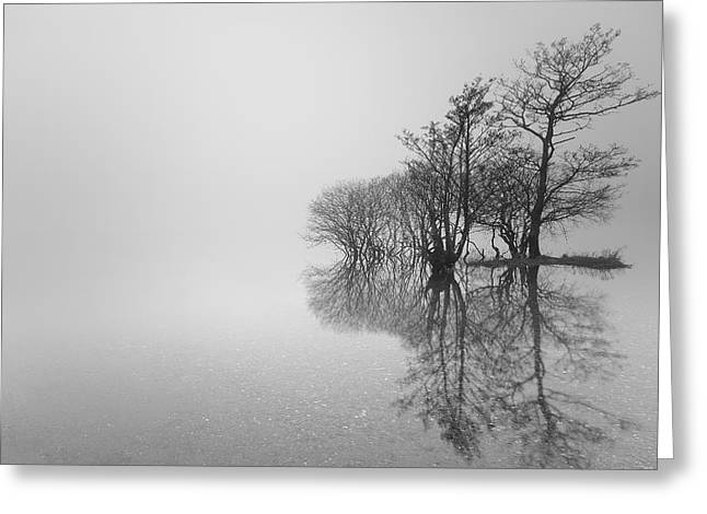 Reflection Of Trees In Water Greeting Cards - Trees Greeting Card by Grant Glendinning
