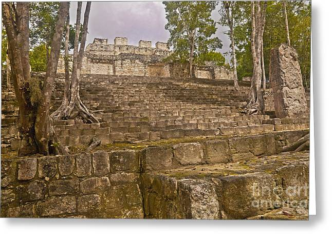 Ageless Greeting Cards - Trees Grow At Calakmul Ruins Greeting Card by Ellen Thane