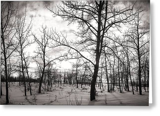 Snow Tree Prints Greeting Cards - Trees Greeting Card by Ian MacDonald
